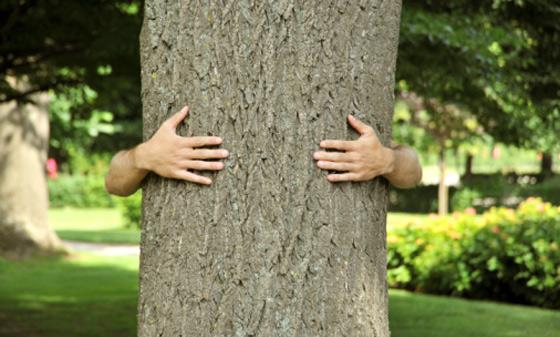 Resultado de imagem para abraçando árvore