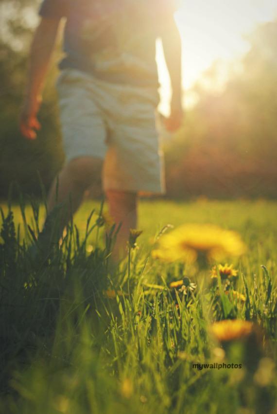 Walk with dandelions