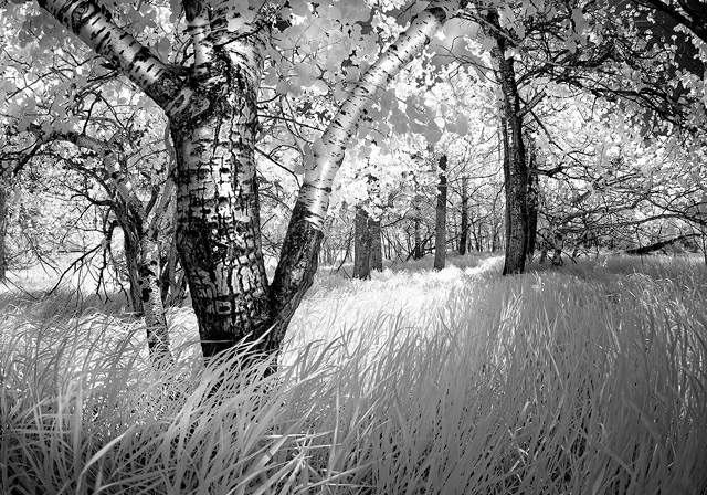infrared, black and white, landscape, Alberta, Dan Jurak, fineart, fine art, summer, prairie,