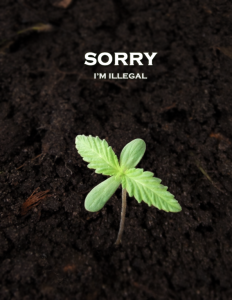 illegalplant